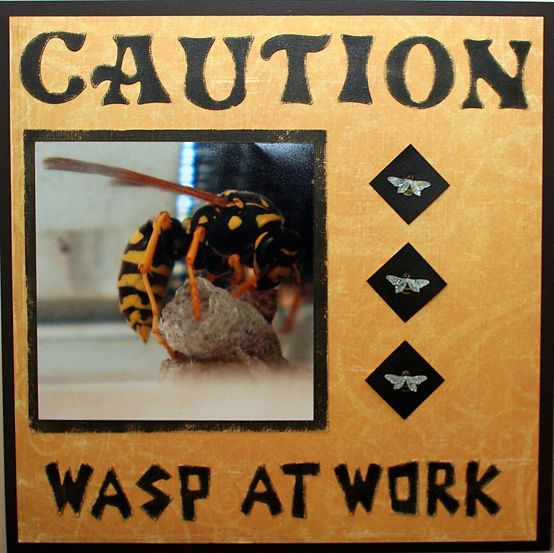 Wasp at work
