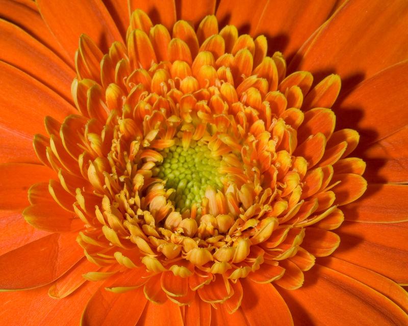 Redorange flower_edited-1